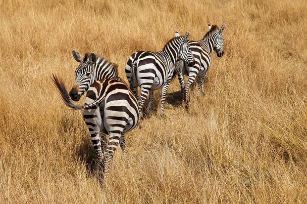 Choáng với hành trình 10 ngày rong ruổi Kenya - châu Phi với toàn những trải nghiệm có 1-0-2: Ai mê khám phá nhất định không được bỏ qua! - Ảnh 27.