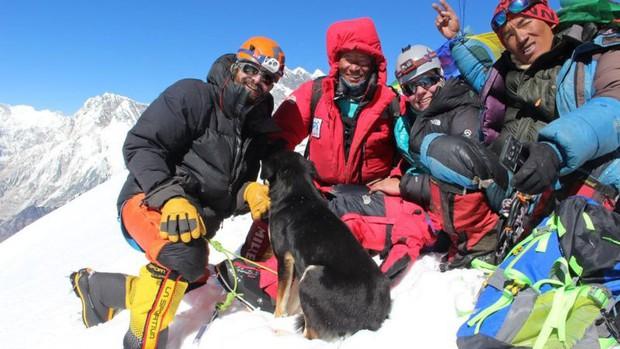 Lẽo đẽo theo sau đoàn leo núi, cô chó hoang lập kì tích khi lên tới đỉnh dãy Himalaya cao hơn 7000 mét - Ảnh 6.