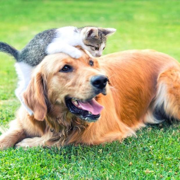 Những căn bệnh nguy hiểm bạn có thể bị lây từ thú cưng - Ảnh 6.