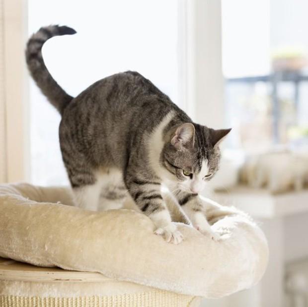Những căn bệnh nguy hiểm bạn có thể bị lây từ thú cưng - Ảnh 8.