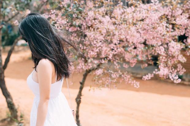 Góc thở dài: Lên Đà Lạt check-in với mai anh đào, nhiều bạn trẻ tiện thể ngắt hoa, bẻ cành, đu hẳn lên tường để chụp ảnh - Ảnh 3.