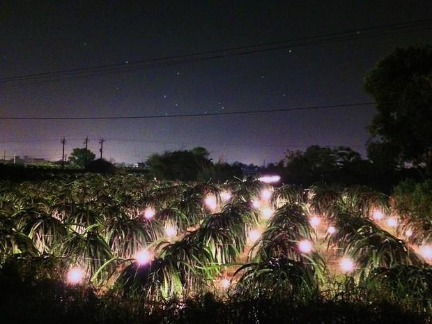 Ai mà ngờ có ngày vườn thanh long ở Phan Thiết lại trở thành điểm đến hot hòn họt được giới trẻ đổ xô kéo đến  - Ảnh 10.