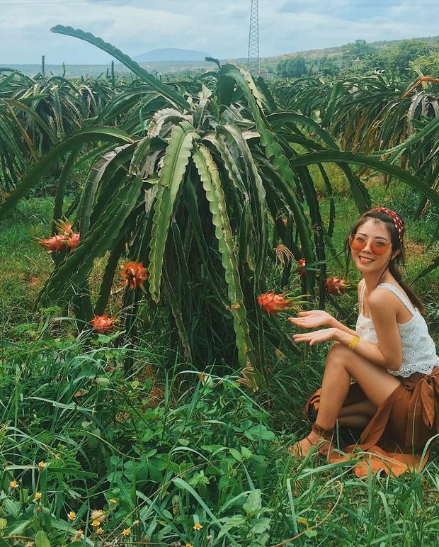 Ai mà ngờ có ngày vườn thanh long ở Phan Thiết lại trở thành điểm đến hot hòn họt được giới trẻ đổ xô kéo đến  - Ảnh 3.