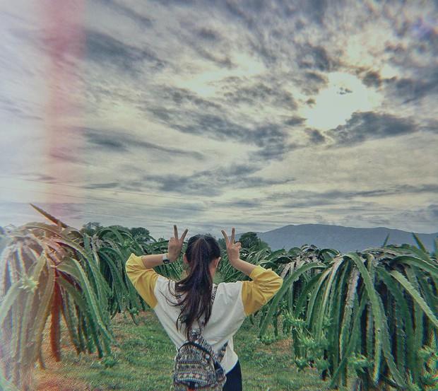 Ai mà ngờ có ngày vườn thanh long ở Phan Thiết lại trở thành điểm đến hot hòn họt được giới trẻ đổ xô kéo đến  - Ảnh 7.