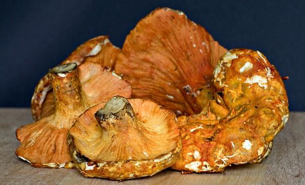 Cảm thấy vi diệu với loài nấm có vị... y chang như thịt tôm hùm - Ảnh 2.