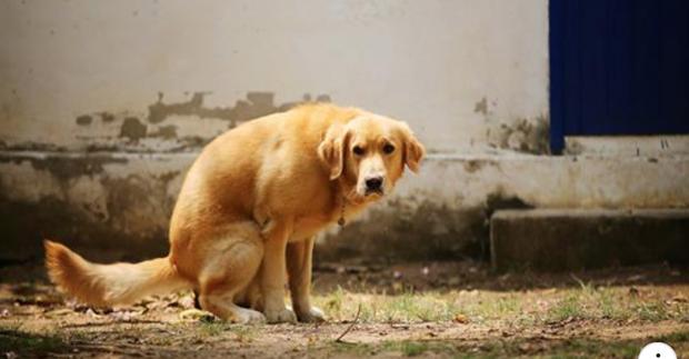 Lý giải bí ẩn trong hội sen: Tại sao các boss chó luôn xoay lòng vòng trước khi đi cầu? - Ảnh 1.
