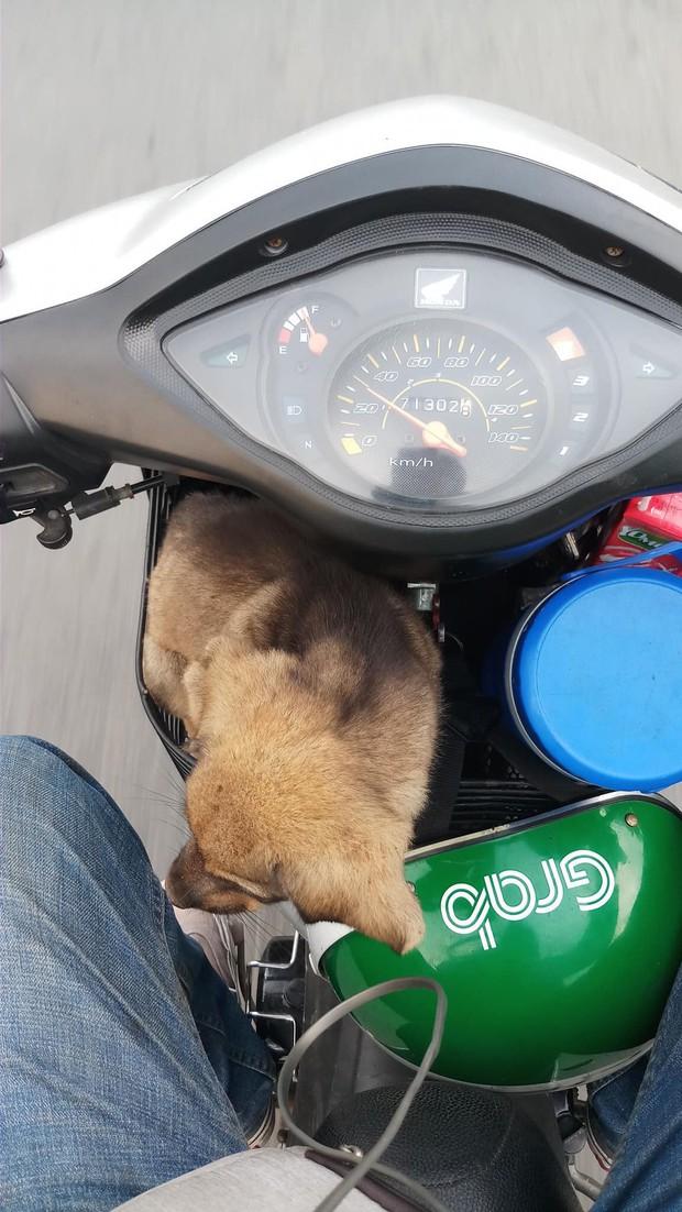 Câu chuyện dễ thương: Chú cún gầy trơ xương nằm bơ vơ bên đường và hành động ấm áp của anh tài xế xe ôm - Ảnh 5.