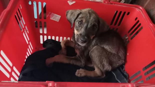 Câu chuyện dễ thương: Chú cún gầy trơ xương nằm bơ vơ bên đường và hành động ấm áp của anh tài xế xe ôm - Ảnh 4.