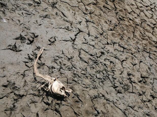 Đây là 9 dấu hiệu ớn lạnh cho thấy nhân loại đã ở giữa kỳ Đại tuyệt chủng lần thứ 6 - Ảnh 2.