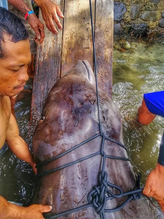 Giới khoa học bàng hoàng phát hiện đến 40kg rác nhựa trong bụng cá voi con dạt vào bờ biển Philippines - Ảnh 1.