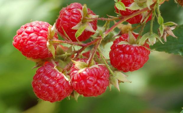 Những loại quả mọng mang đến lợi ích tuyệt vời cho sức khỏe - Ảnh 2.