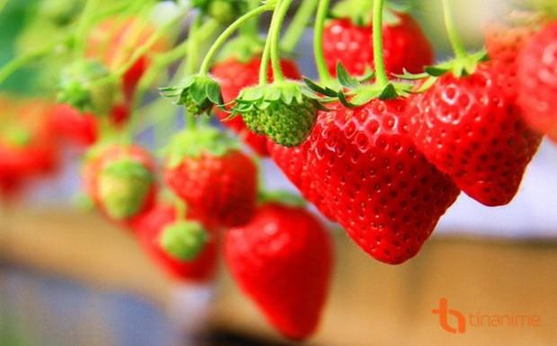 Những loại quả mọng mang đến lợi ích tuyệt vời cho sức khỏe - Ảnh 4.