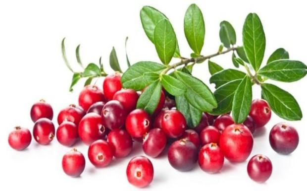 Những loại quả mọng mang đến lợi ích tuyệt vời cho sức khỏe - Ảnh 6.