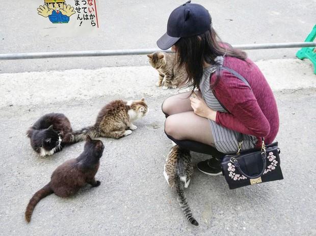 Đến thăm đảo mèo lớn nhất Nhật Bản, hội con sen đến đây thì đảm bảo sướng phát ngất! - Ảnh 8.