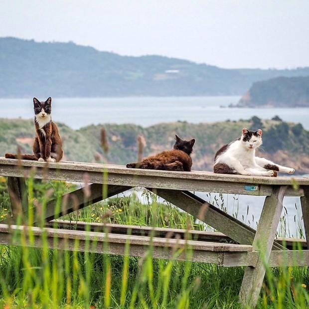 Đến thăm đảo mèo lớn nhất Nhật Bản, hội con sen đến đây thì đảm bảo sướng phát ngất! - Ảnh 10.