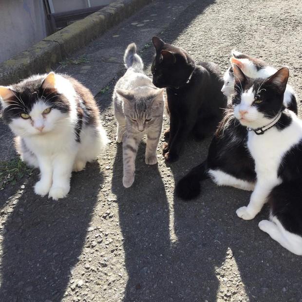 Đến thăm đảo mèo lớn nhất Nhật Bản, hội con sen đến đây thì đảm bảo sướng phát ngất! - Ảnh 6.
