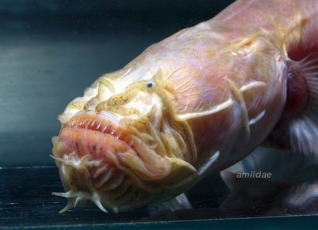Con vật này chứng minh nước Úc là nơi bạn có thể tìm thấy những điều kỳ lạ nhất, kể cả... quái vật ngoài hành tinh - Ảnh 2.