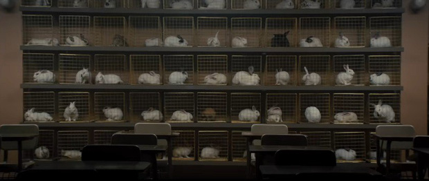 Đàn thỏ đông ấn tượng trong Us không chỉ diễn vai quần chúng mà còn chứa đầy thông điệp ẩn ý! - Ảnh 8.