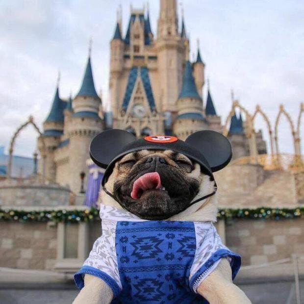 Chú cún khiến cả thế giới ghen tị vì đi du lịch và check-in toàn những nơi sang chảnh - Ảnh 3.