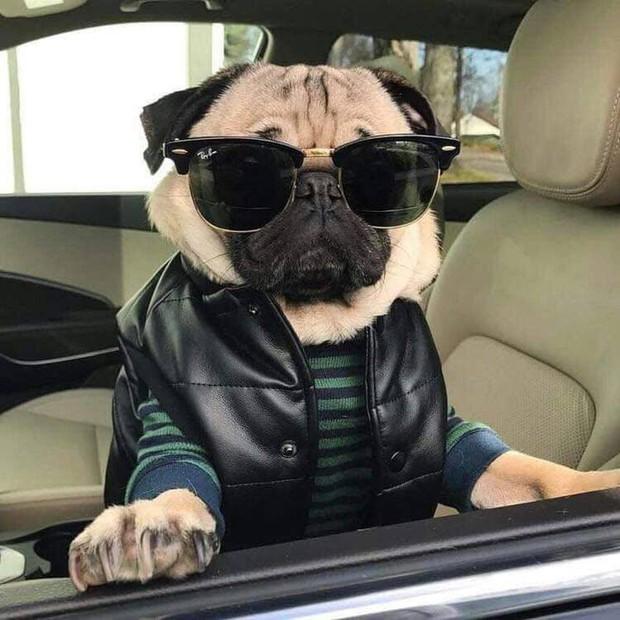 Chú cún khiến cả thế giới ghen tị vì đi du lịch và check-in toàn những nơi sang chảnh - Ảnh 5.