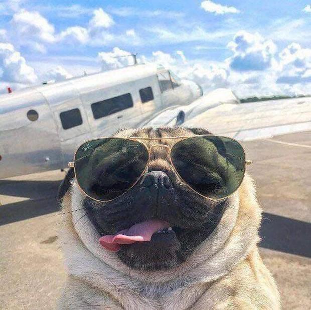 Chú cún khiến cả thế giới ghen tị vì đi du lịch và check-in toàn những nơi sang chảnh - Ảnh 7.