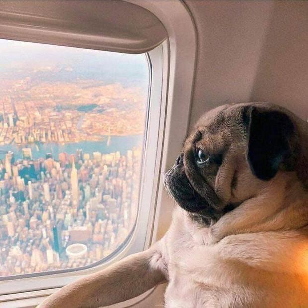 Chú cún khiến cả thế giới ghen tị vì đi du lịch và check-in toàn những nơi sang chảnh - Ảnh 11.