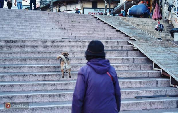 Câu chuyện đáng yêu của người phụ nữ bán vé số và chú chó lang thang ở Đà Lạt - Ảnh 7.