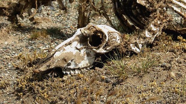 Argentina phát hiện hóa thạch khủng long chân chim mới  - Ảnh 1.