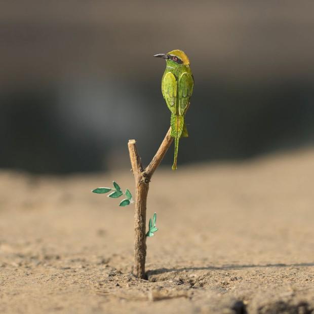 Kinh ngạc trước loạt chim bé bằng móng tay nhưng thông điệp mà chúng truyền tải mới là điều ý nghĩa - Ảnh 11.