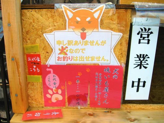 Chú chó shiba quản lý quầy khoai lang nướng ở Nhật khiến 5000 anh em mong mỏi được diện kiến một lần - Ảnh 5.