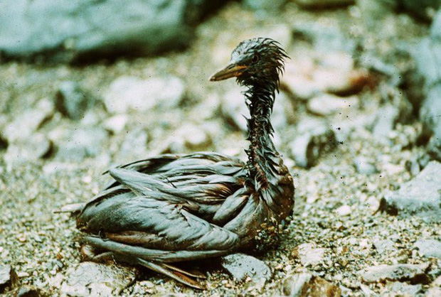 Sau 30 năm, những bức ảnh từ thảm họa tràn dầu Exxon Valdez vẫn còn gây ám ảnh - Ảnh 11.