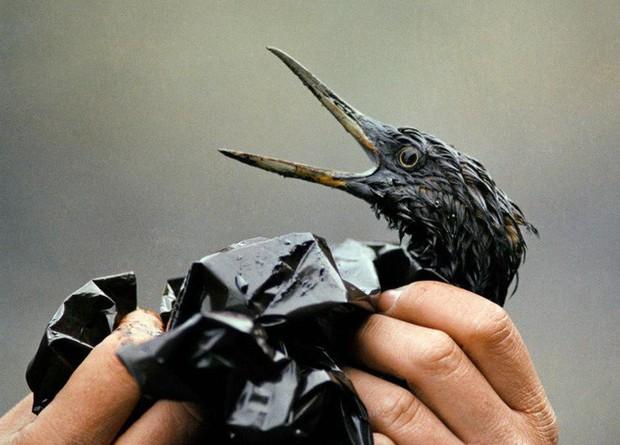 Sau 30 năm, những bức ảnh từ thảm họa tràn dầu Exxon Valdez vẫn còn gây ám ảnh - Ảnh 3.