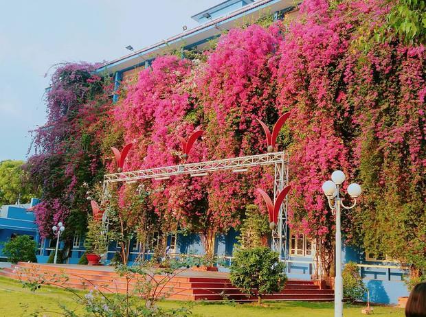 Xuất hiện ngôi trường với giàn hoa giấy khổng lồ nhuộm hồng cả góc trời, sống ảo cứ gọi là mê li trở lên! - Ảnh 1.