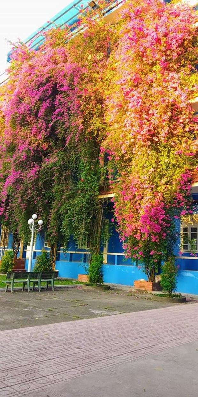 Xuất hiện ngôi trường với giàn hoa giấy khổng lồ nhuộm hồng cả góc trời, sống ảo cứ gọi là mê li trở lên! - Ảnh 2.