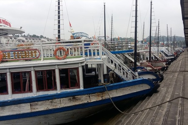 Một du khách Nhật ngã xuống nước, tử vong tại cảng Tuần Châu - Ảnh 1.