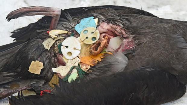 Rác thải nhựa: Thứ chúng ta chỉ dùng vài phút ngắn ngủi nhưng lại là bi kịch nghìn năm của mọi sinh vật biển - Ảnh 12.