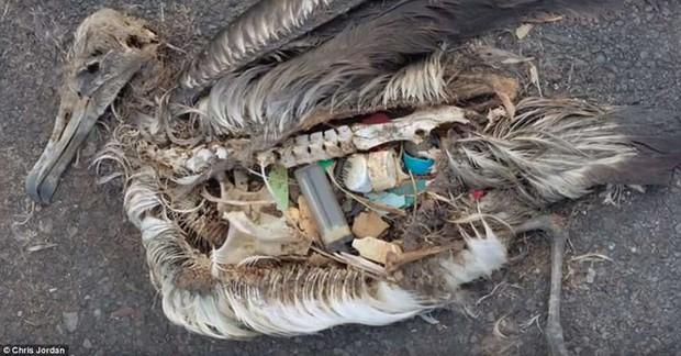 Rác thải nhựa: Thứ chúng ta chỉ dùng vài phút ngắn ngủi nhưng lại là bi kịch nghìn năm của mọi sinh vật biển - Ảnh 13.