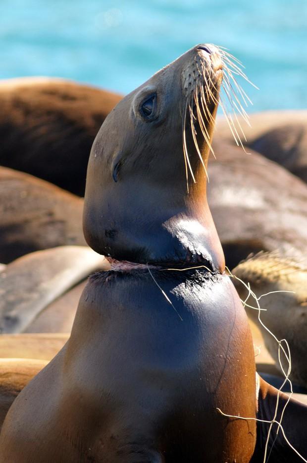 Rác thải nhựa: Thứ chúng ta chỉ dùng vài phút ngắn ngủi nhưng lại là bi kịch nghìn năm của mọi sinh vật biển - Ảnh 14.
