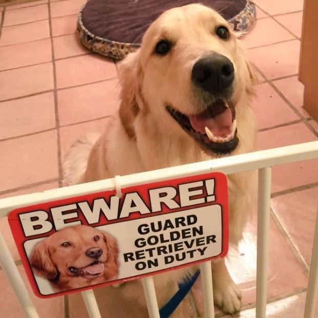 Chùm ảnh về những con boss ngáo ngơ phủi bỏ mọi ý nghĩa của tấm bảng coi chừng chó dữ - Ảnh 18.