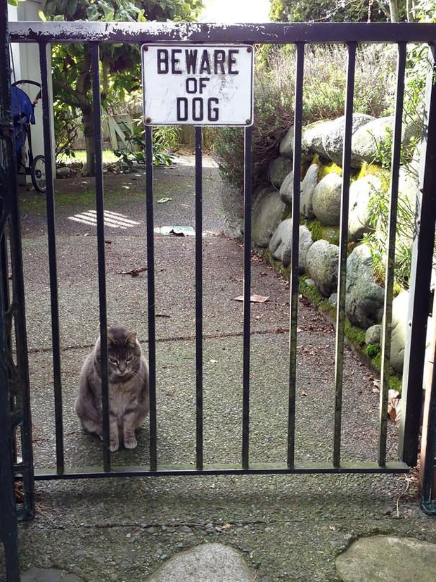 Chùm ảnh về những con boss ngáo ngơ phủi bỏ mọi ý nghĩa của tấm bảng coi chừng chó dữ - Ảnh 13.