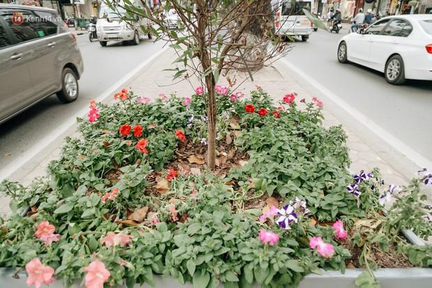 Clip bức xúc: Nhiều người dừng xe giữa đường phố Hà Nội mót hoa trang trí, lãnh đạo Công ty Công viên cây xanh lên tiếng - Ảnh 3.