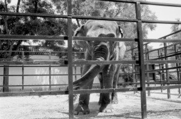 Con voi buồn nhất thế giới qua đời sau 43 năm bị nhốt - Ảnh 1.