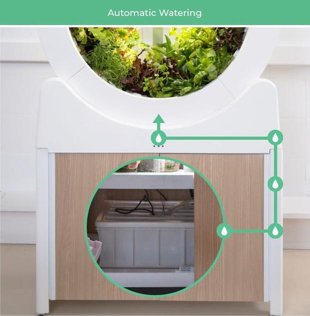 Tham khảo ngay cỗ máy này nếu bạn đang ở chung cư nhưng vẫn muốn ăn rau sạch tự trồng - Ảnh 2.