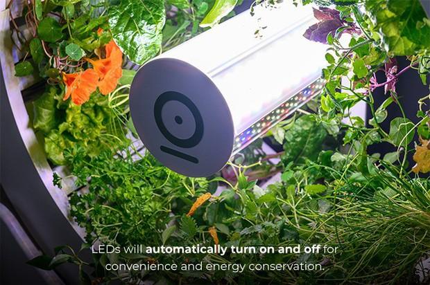 Tham khảo ngay cỗ máy này nếu bạn đang ở chung cư nhưng vẫn muốn ăn rau sạch tự trồng - Ảnh 3.