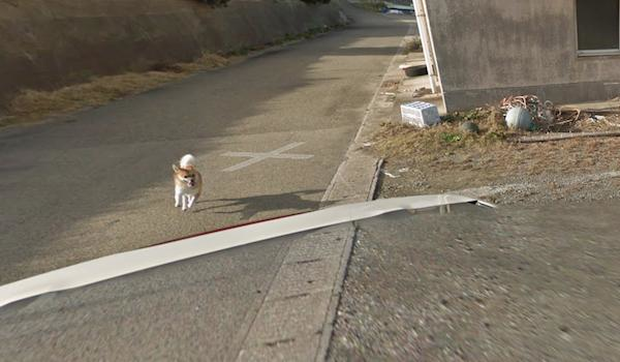 Chú chó Nhật hủy hoại mọi khung hình của Google Street View vì đuổi theo camera - Ảnh 8.