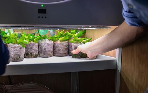 Tham khảo ngay cỗ máy này nếu bạn đang ở chung cư nhưng vẫn muốn ăn rau sạch tự trồng - Ảnh 7.