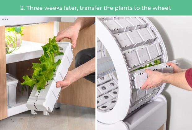 Tham khảo ngay cỗ máy này nếu bạn đang ở chung cư nhưng vẫn muốn ăn rau sạch tự trồng - Ảnh 8.