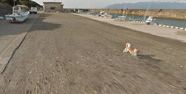 Chú chó Nhật hủy hoại mọi khung hình của Google Street View vì đuổi theo camera - Ảnh 10.