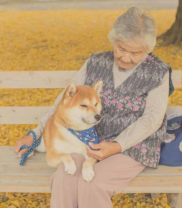 Bộ ảnh đầy cảm xúc của cụ bà Nhật Bản và chú cún con: Khi về già, chỉ cần một người đồng hành đáng yêu thế này thôi! - Ảnh 3.