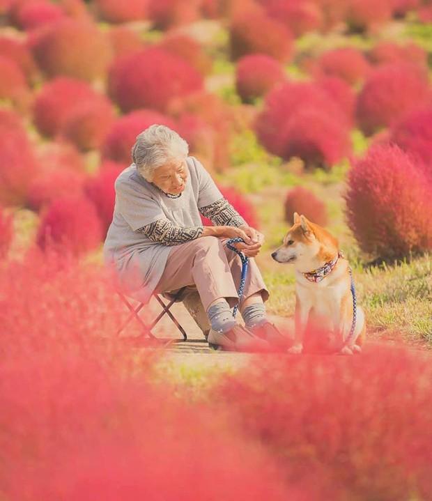 Bộ ảnh đầy cảm xúc của cụ bà Nhật Bản và chú cún con: Khi về già, chỉ cần một người đồng hành đáng yêu thế này thôi! - Ảnh 5.